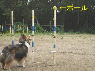 ボールよ、落ちるざますよ!!