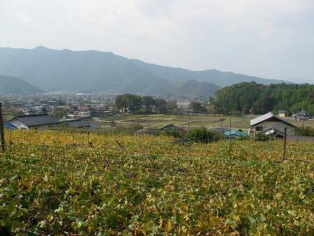 松代のブドウ畑