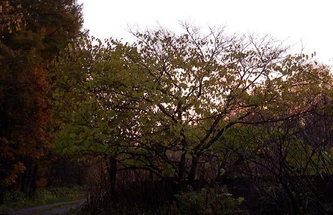 10.23.夫婦の滝 (3)