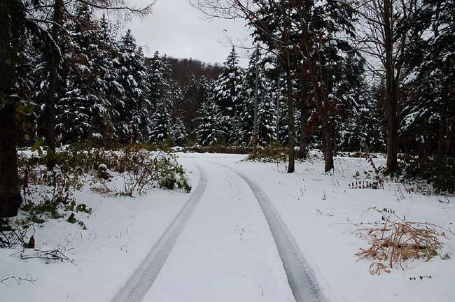 11.1初雪 (14)