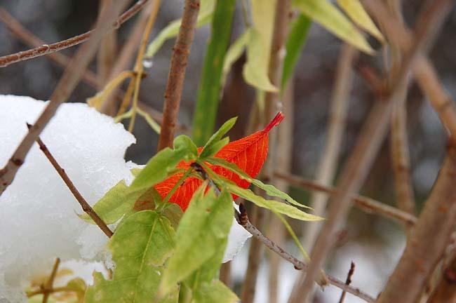 11.1初雪 (2)