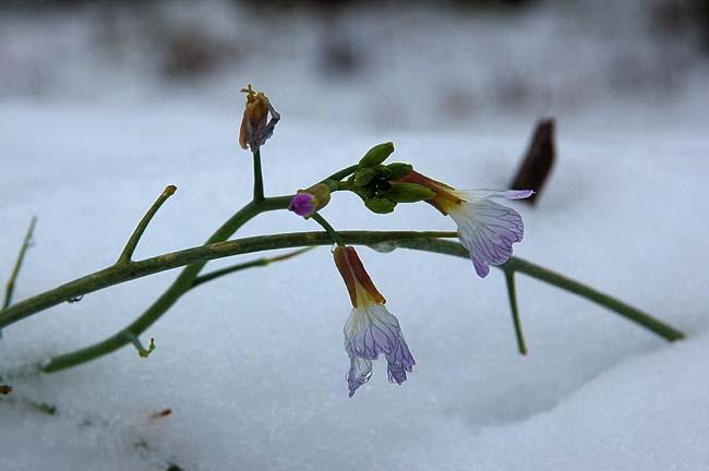 11.1初雪 (1)