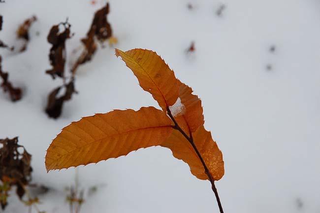 11.1初雪 (4)