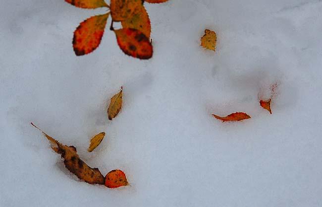 11.1初雪 (13)