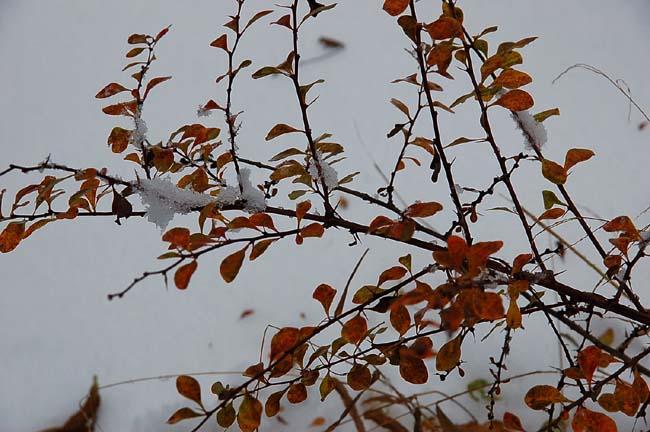 11.1初雪 (18)