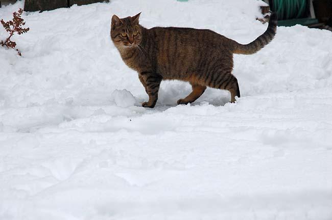 11.1初雪 (7)