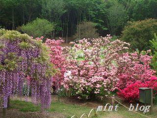 藤の花 073