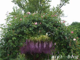 藤の花 069