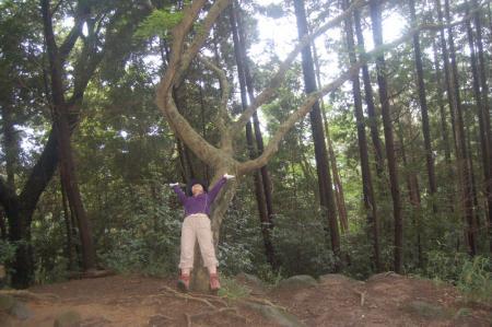 イナバウアーの木