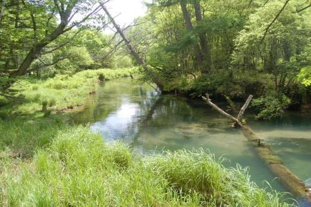 新緑の湯川