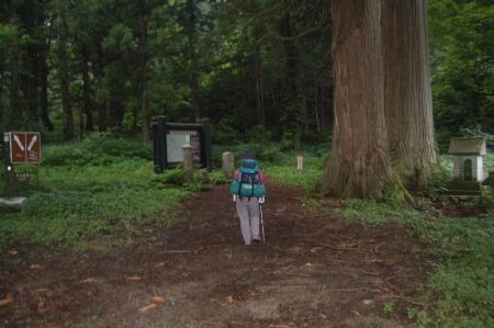 杉と栃の木