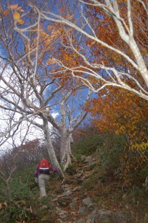 小朝日岳への登り36