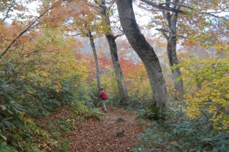 小寺山からの下山路47