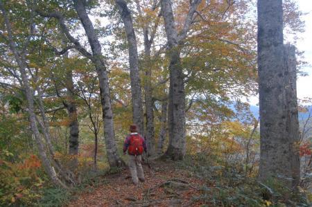 小寺山からの下山路52