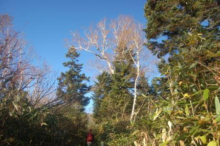 樹林帯の路16
