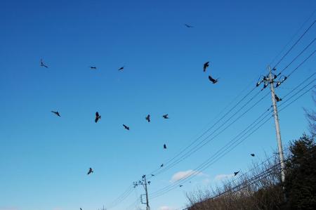 34鳥の群れ