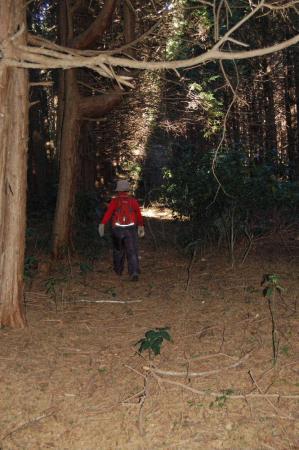 13加賀田山への尾根