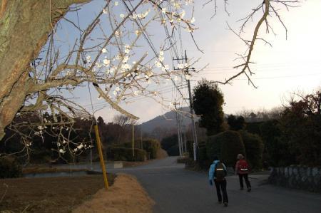 3梅の花が咲く道