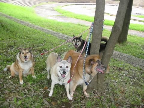 犬たち40055
