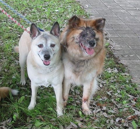 犬たち40058