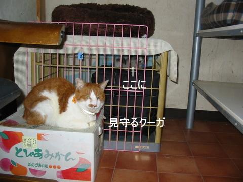 子猫0000