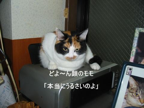 子猫0004