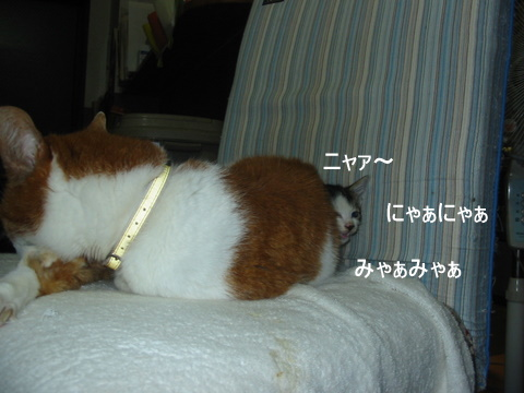 子猫0010