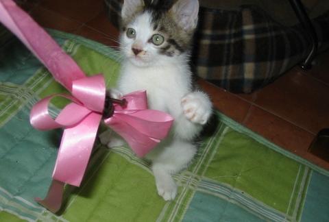 子猫0019