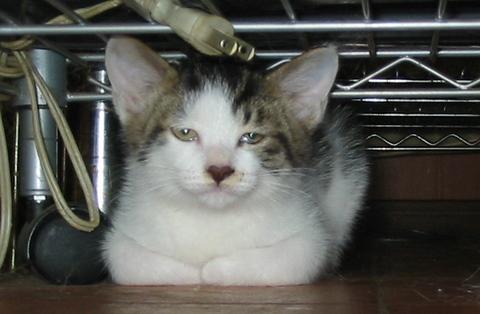 子猫0022