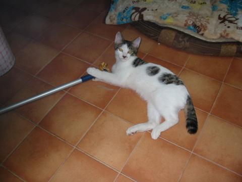 子猫0061