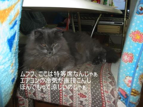子猫0093