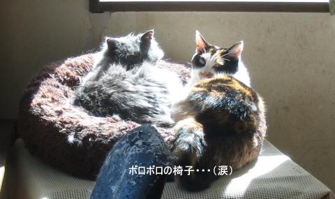 猫たち0148