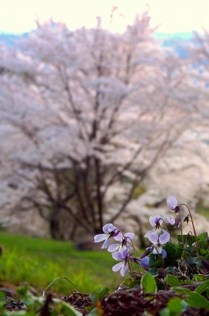 sg-2010年4月21日0082