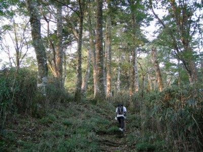 高塚山ブナ林