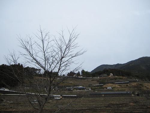 2010-2-16-3.jpg