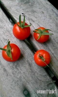 090921今日の収穫