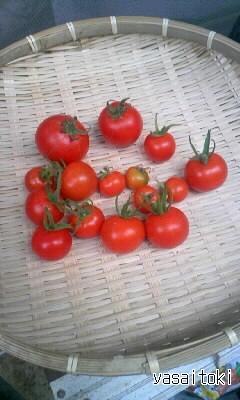090927今日の収穫