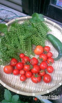 091003今日の収穫