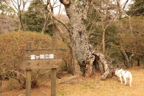 2010_0318_7.jpg