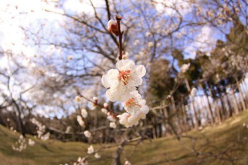 2010_0413_3.jpg