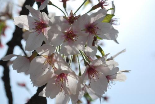 2010_0418_1.jpg