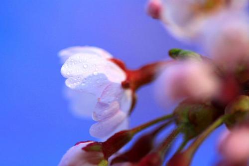 2010_0428_5.jpg