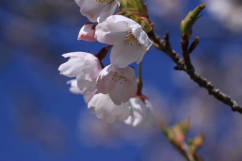 2010_0430_3.jpg