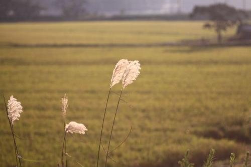 2010_0909_2.jpg