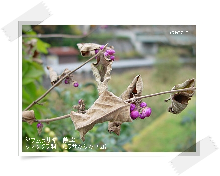 350komurasaki91109c1.jpg