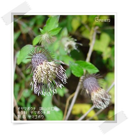 350oyamabokuchi91030b1.jpg