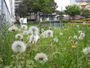 20120502-6.jpg