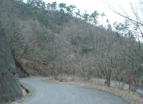 大綱林道-途中