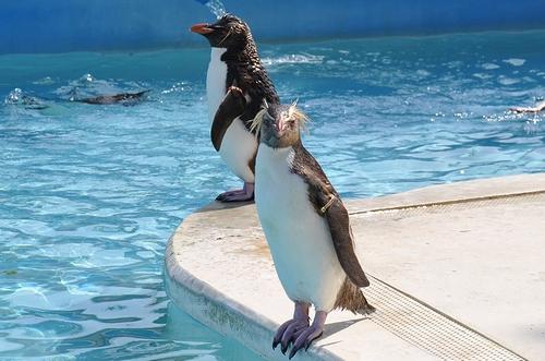 油壺マリンパーク-ペンギン