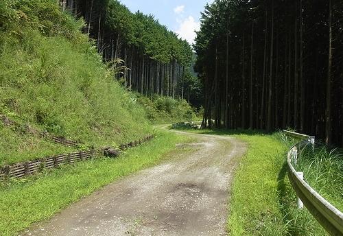 林道白岩柿平線-柿平側途中1